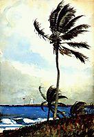 Palm tree, Nassau, 1898, homer