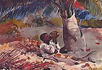 Under the coco palm, 1898, homer