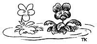 Daisies, kittelsen