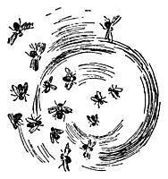 Insects, kittelsen