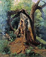 An old tree, 1859, lagorio