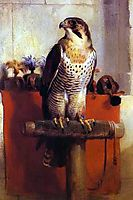 The Falcon, 1837, landseer