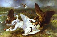 Swannery Invaded by Eagles, 1869, landseer