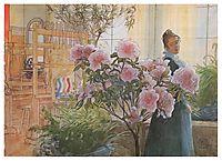 Azalea, 1906, larsson