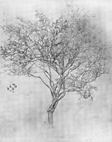 Study of a Lemon Tree, 1859, leighton