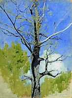 Trunk of burgeoning oak, c.1882, levitan