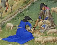 Juillet Sheep Shearing, limbourg
