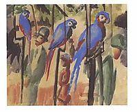 Blue Parrots , macke