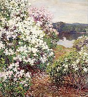 Mountain Laurel, 1905, metcalf