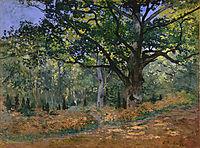 The Bodmer Oak, Fontainebleau, 1865, monet