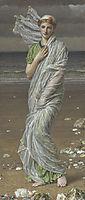 Seashells, moore