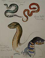 Four studies of snakes, moreau