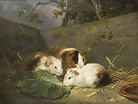Guinea Pigs, 1792, morland