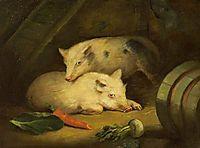 Pigs, morland
