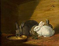 Rabbits, morland