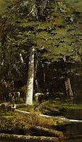 In the Forest, nittis