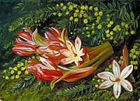 Australian Spear Lily and an Acacia, 1880, north