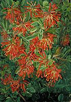 Burning Bush and Emu Wren of Chili, 1880, north