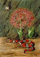 Flor Imperiale, Coral Snake and Spider, Brazil, 1873, north
