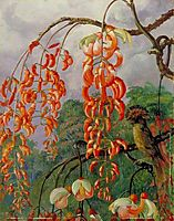 Flowers of a Coral Tree and King of the Flycatchers, Brazil, north