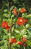 Flowers of the Pomegranate, Painted in Teneriffe, north