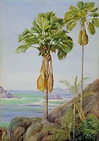 Male and Female Trees of the Coco de Mer in Praslin, 1883, north