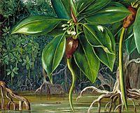 A Mangrove Swamp in Sarawak, Borneo, 1876, north