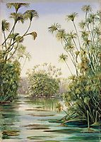 Papyrus or Paper Reed Growing in the Ciane, Sicily, 1870, north
