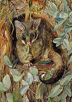 Possum up a Gum Tree, 1880, north
