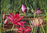 Red Water Lily of Southern India, 1878, north