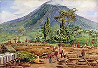 Tea-Drying in Mr Hölle-s Establishment, Java, 1876, north