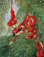 The Wild Tamarind of Jamaica with Scarlet Pod and Barbet, 1872, north
