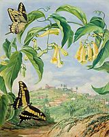 Yellow Bignonia and Swallow-Tail Butterflies with a View of Congonhas, Brazil, north