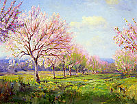 Peach Orchard on Mavericks Farm, 1915, onderdonk