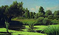The landscape. The reeds in the river., c.1890, orlovsky