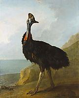 Cassowary, 1746, oudry