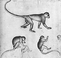 Apes, 1430, pisanello
