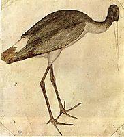 Stork, 1430, pisanello