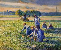 Picking Peas, c.1887, pissarro