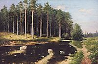 Pine Forest on the banks of the river, polenov