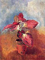 Begonia in a Pot, c.1910, redon