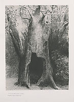 I plunged into solitude. I dwelt in the tree behind me. (plate 9), 1896, redon