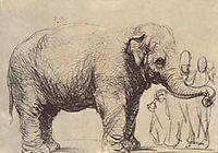 An Elephant, 1637, rembrandt
