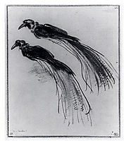 Two Studies Of A Bird Of Paradise, 1630, rembrandt