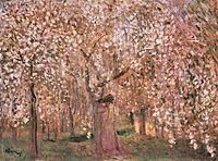 Cherry tree blossoms, ripplronai