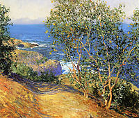 Indian Tobacco Trees, La Jolla, 1916, rose