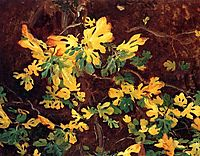 Study of a Fig Tree, 1908, sargent
