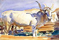 White Ox at Siena, c.1910, sargent