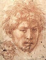 Head of a Young Man, 1520, sarto