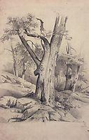 Oak, c.1850, savrasov